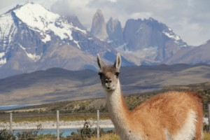 Official Torres del Paine greeter