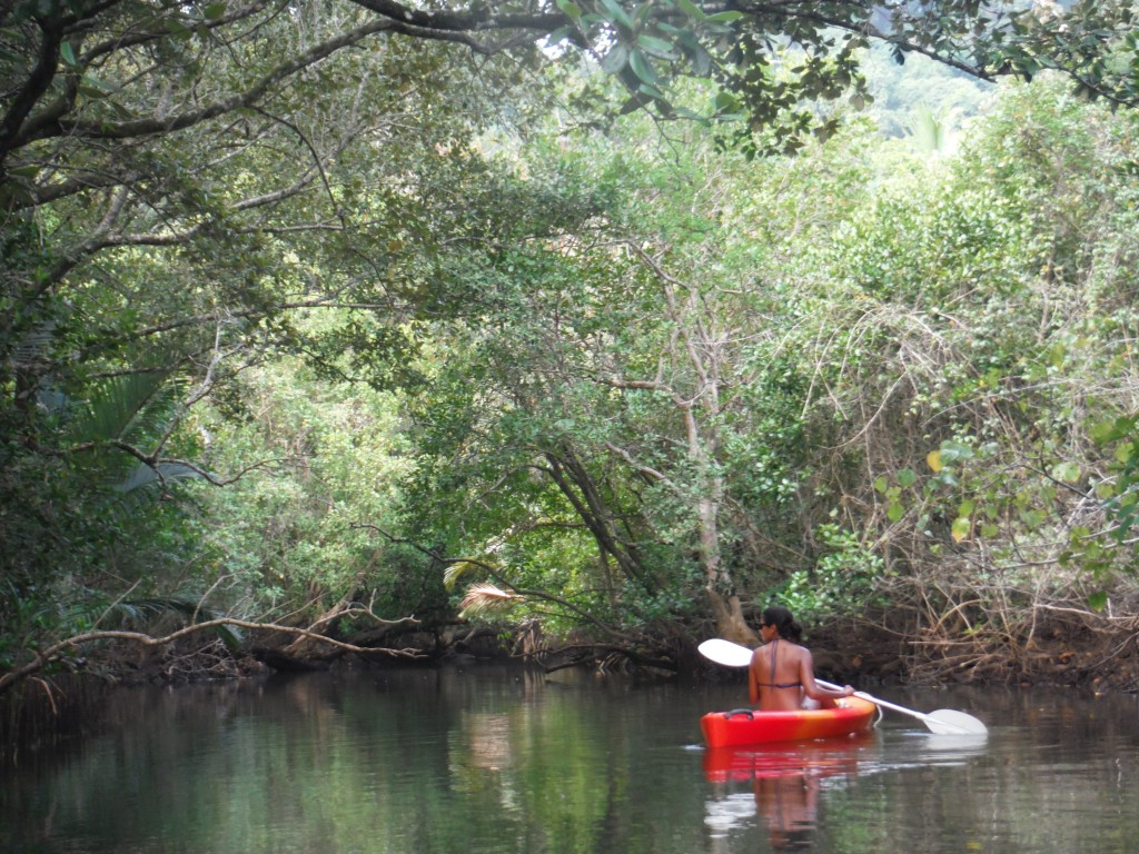 River kayaking through the jungle