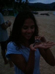 An energetic baby Green turtle, about to be released