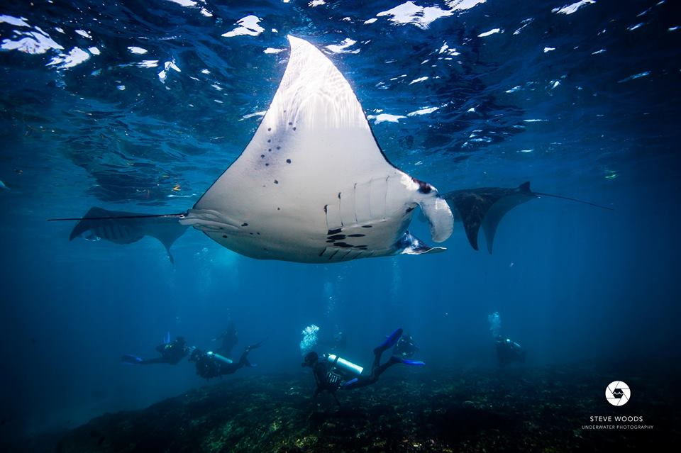 Manta Rays-- Complements of Blue Corner's facebook page
